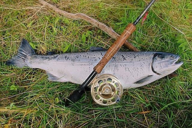 ryba na aljašce