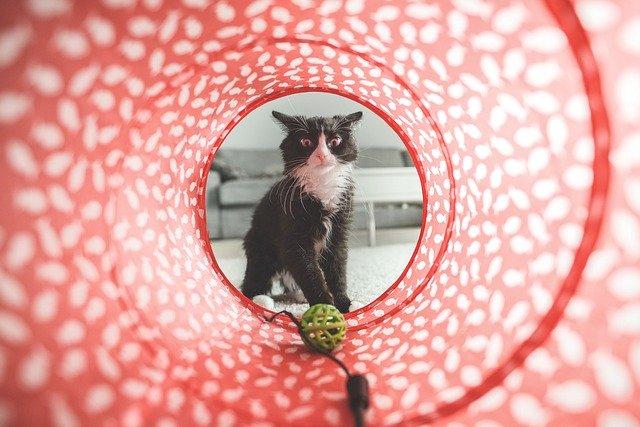 kočka v tunelu